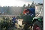 Tannenbaumsammeln mit der Jugendfeuerwehr 12012013